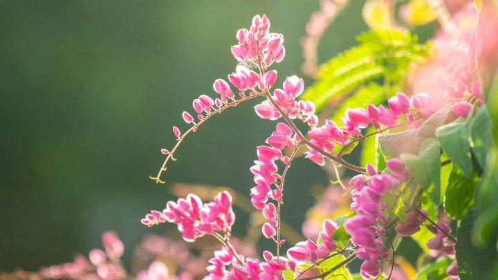 Vijf duurzame tuintrends voor aankomende zomer